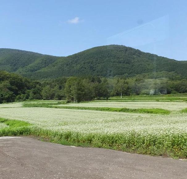 パラライフ北海道